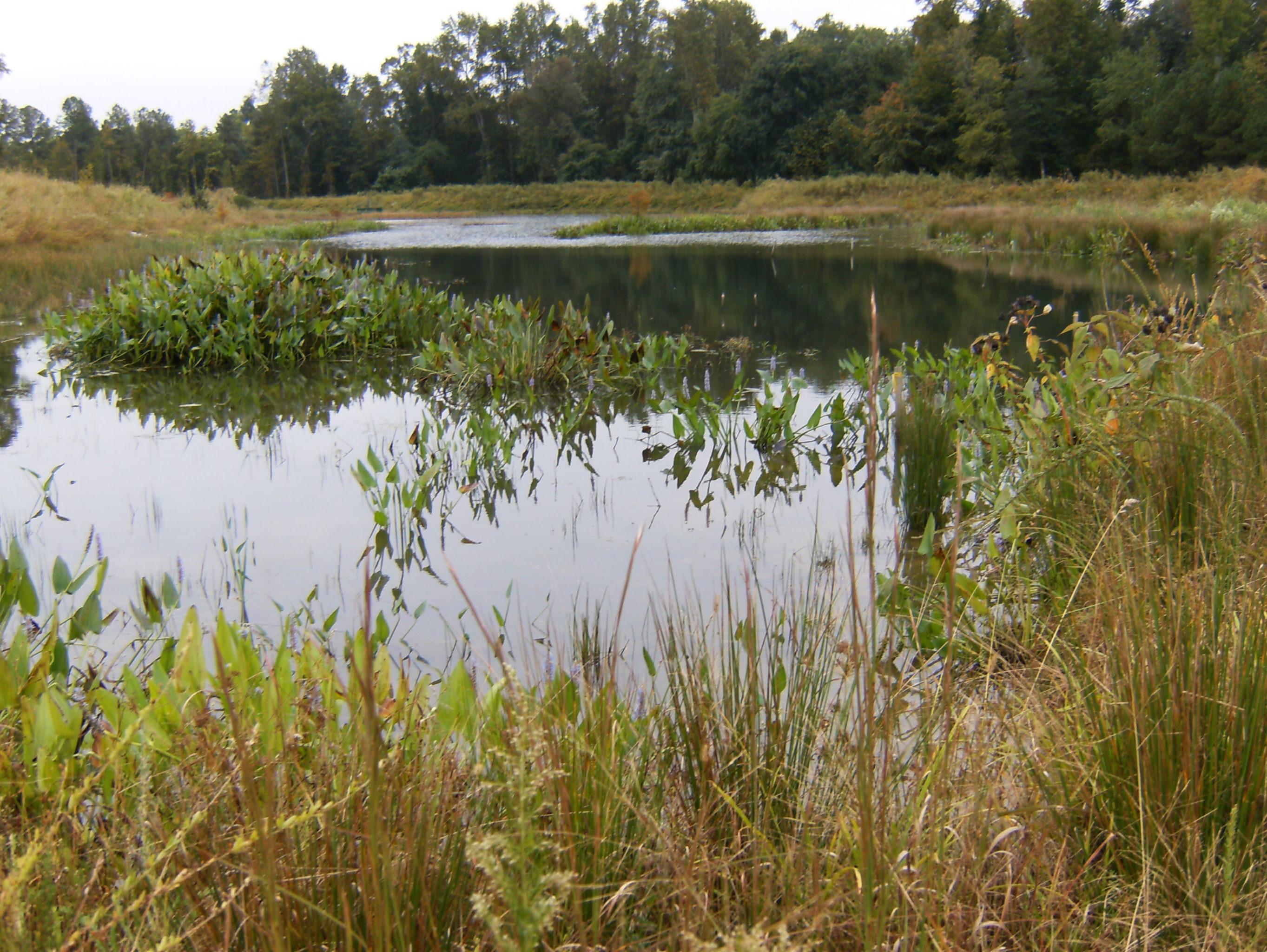Commercial Landscape Portfolio Bland Landscaping Raleigh